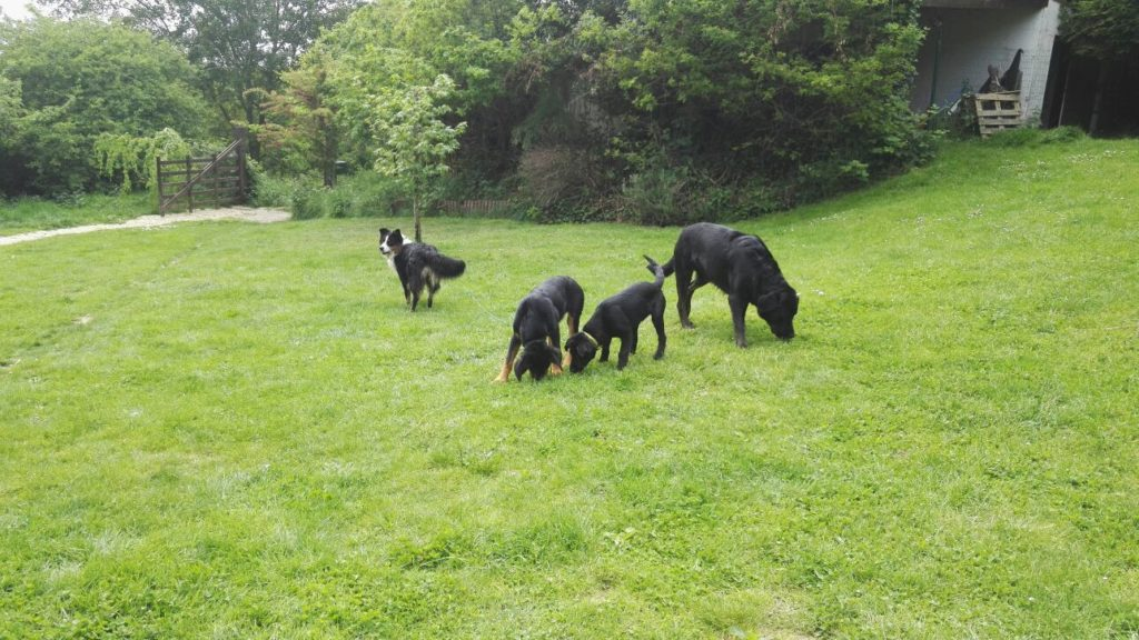 education canine chien educateur canin chiot  rouen normandie louviers evreux